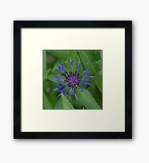 Thin blue flames in a sea of green Framed Print