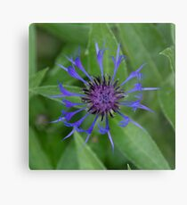Thin blue flames in a sea of green Metal Print