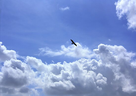 An Eagle In The Sky By Syed Rizwan Ali