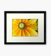 Sunny Side Up! Framed Print