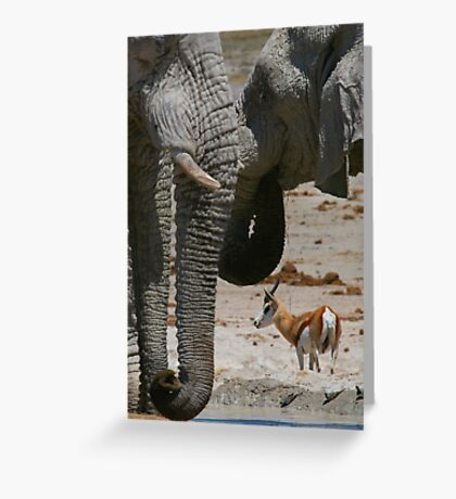 African Waterhole Greeting Card