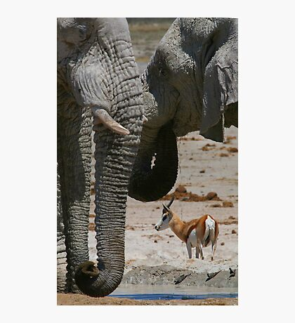 African Waterhole Photographic Print