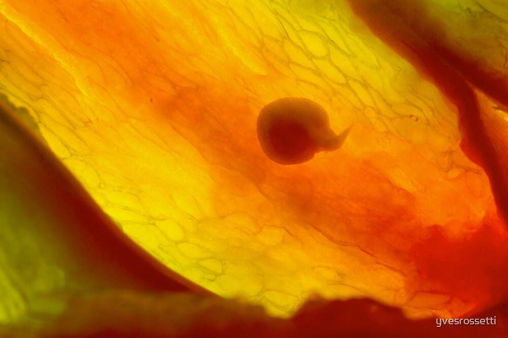 the Origin of life by yvesrossetti
