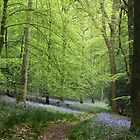 A Walk in Bluebell Wood - image 4 by missmoneypenny