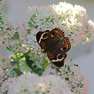 Nature's Beauty Spots by ej29