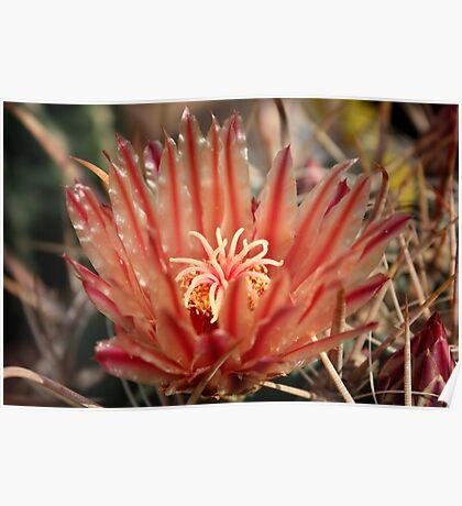 Cacti flower Poster