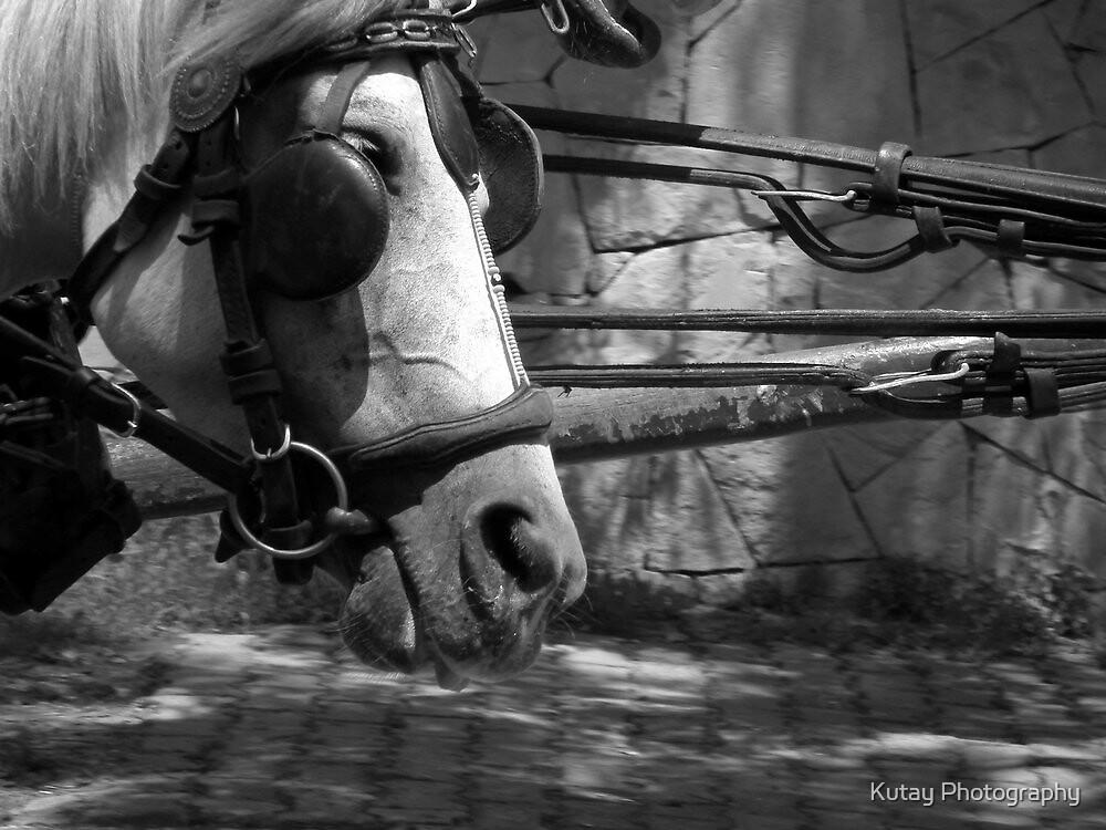 Fayton / Phaeton by Kutay Photography