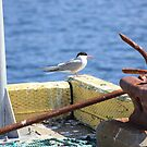 Sitting On The Dock Of The Bay - Arctic Tern by Leslie van de Ligt