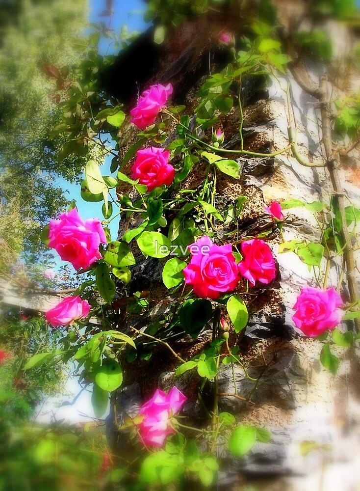 Rose Bower by lezvee