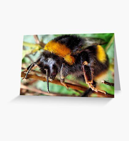 Buff Tailed Bumble Bee Greeting Card