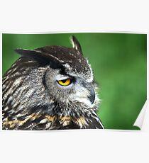Eagle Owl 3 Poster