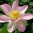 LOTUS POSITION... by Marilyn Grimble