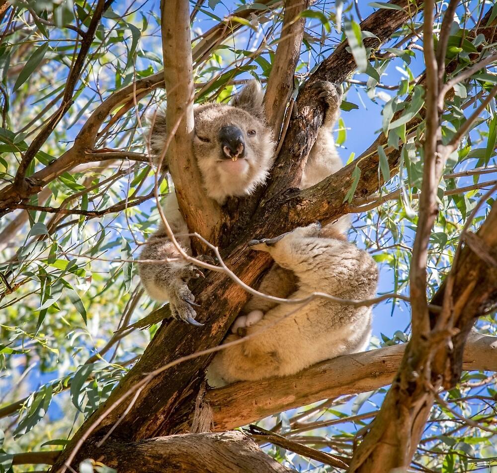 Pooping Koala! by Aiin Ojani