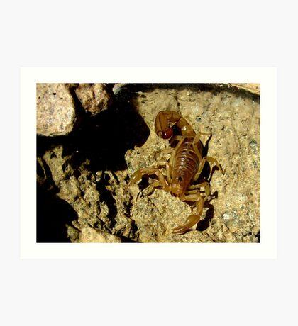 Stripe-tailed Scorpion Art Print
