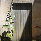Porte trémière by Dominique MEYNIER