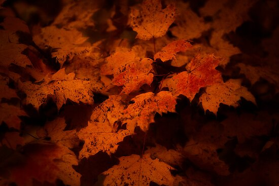 Fall's Furry by James L. Brown