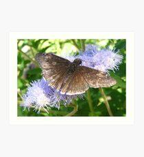Butterfly ~ Funereal Duskywing Art Print