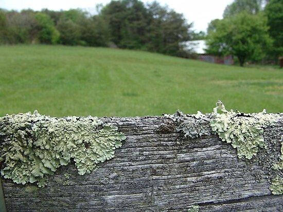 Good fences make good neighbors by May Lattanzio