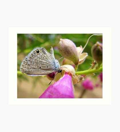 Butterfly ~ Marine Blue Art Print