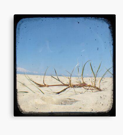 Grassy Dunes - TTV #4 Canvas Print