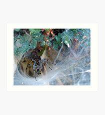 Funnel Web Spider Art Print