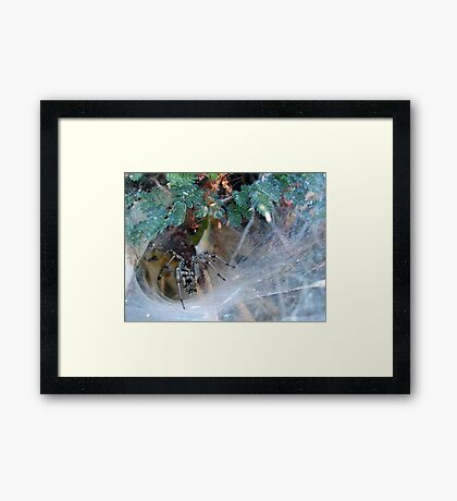 Funnel Web Spider Framed Print