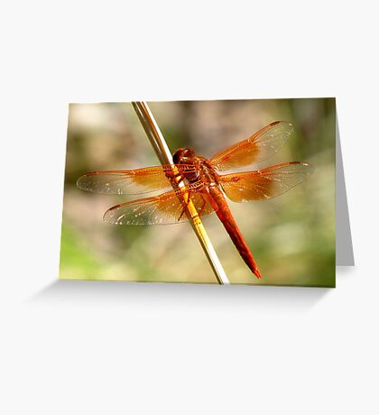 Dragonfly ~ Flame Skimmer (Male) Greeting Card