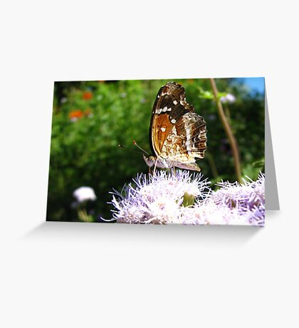 Butterfly ~ Texan Crescent Greeting Card