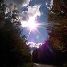 Shining Down by Michelle Hitt