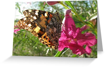 Butterfly ~ Painted Lady by Kimberly Chadwick