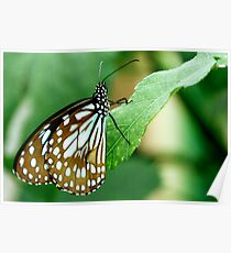 Green Butterfly!! Poster