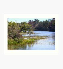 Florida's Rainbow River Art Print