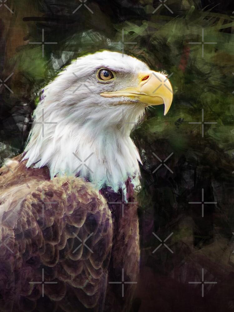 American Bald Eagle by morningdance