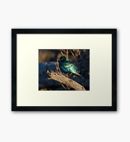 What Beauty Framed Print
