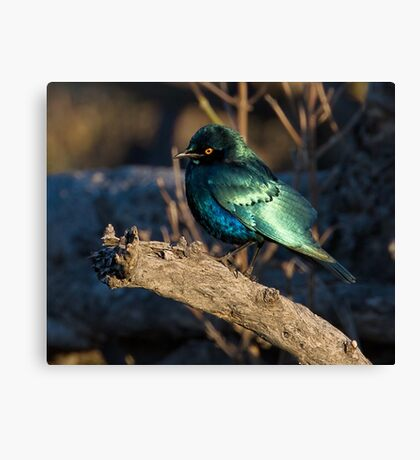 What Beauty Canvas Print