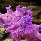 Scorpionfish by Scott Carr