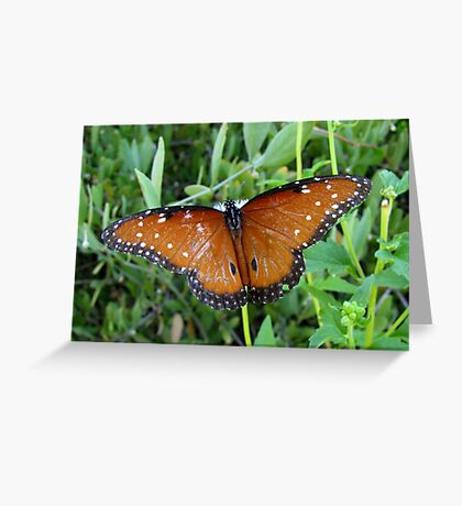Butterfly ~ Queen Greeting Card