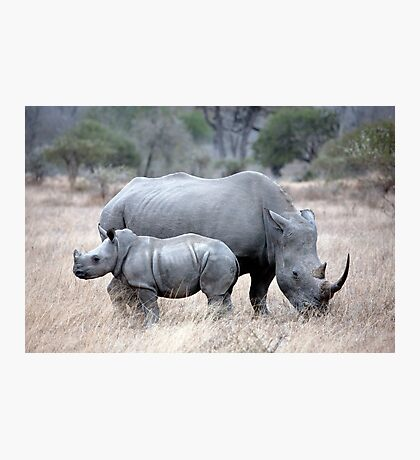 Mother And Baby Rhino Photographic Print