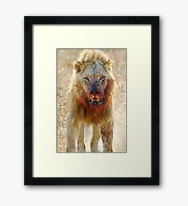 Majingilane - Male Lion - Hyena Intimidation Framed Print