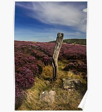 Wintergill Heather Poster