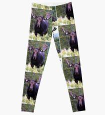 Bull moose Leggings