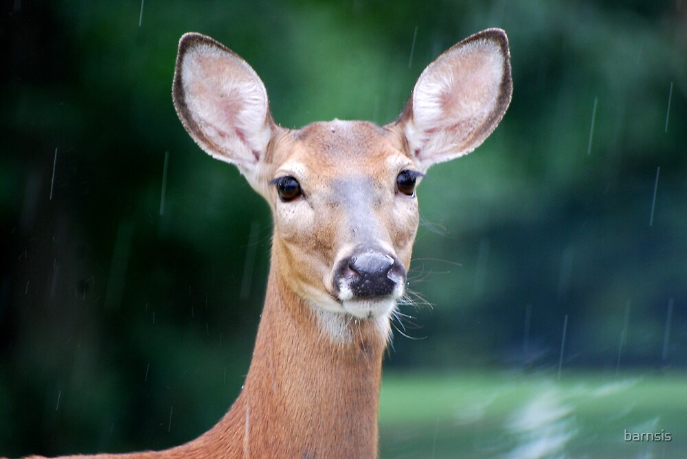 Deer Me, I Think it is Going to Rain by barnsis