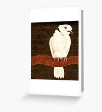 Ring Neck Dove Resting on Branch Greeting Card