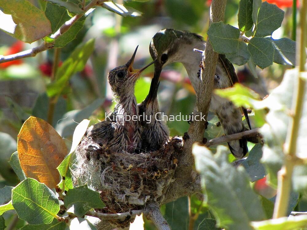 Costa's Hummingbird ~ Growing Still..... by Kimberly Chadwick