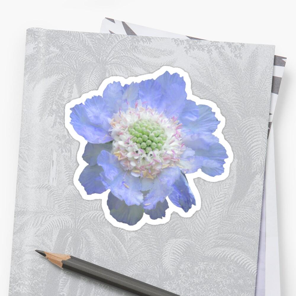wundervolle blaue Blume, Blüte, Garten, Natur, natürlich Sticker