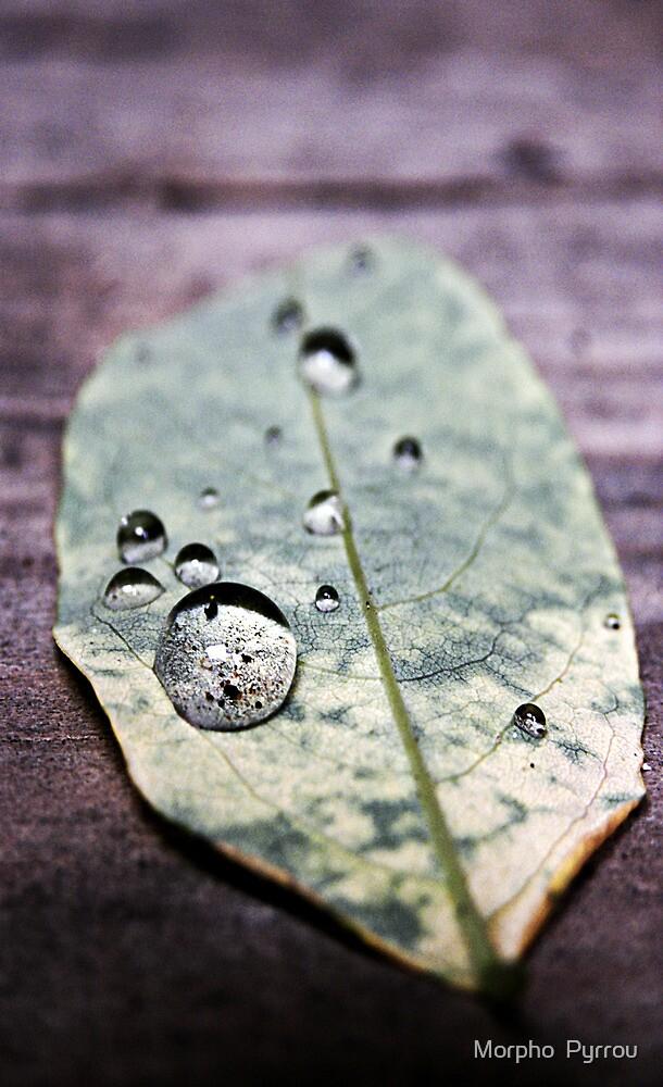 precious raindrops by Morpho  Pyrrou