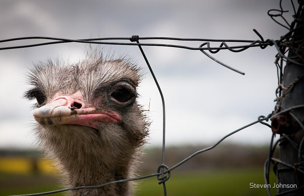 Wiry Ostrich by Steven Johnson