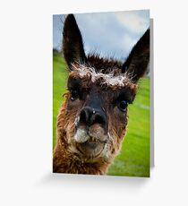 Wacky Alpaca Greeting Card
