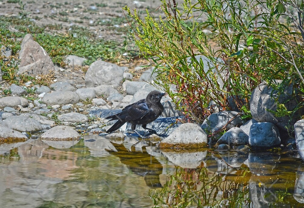 Quenching the Raven by Skye Ryan-Evans
