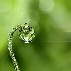 Early Morning Dew by Sharon Johnstone